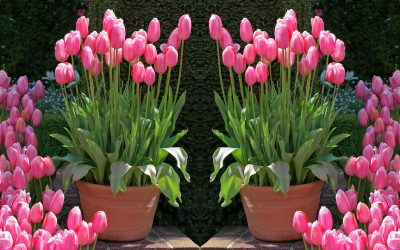 Time for spring bulbs